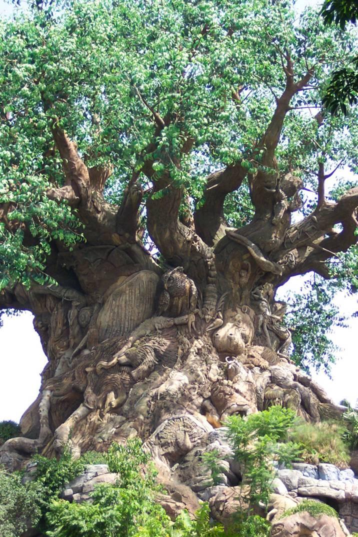 [Bild: gods_tree_nalgonda_india.jpg]